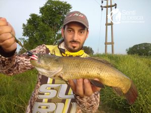 HOPLIAS LURES TESTEO MODELO KILLER Y MINI KILLER10