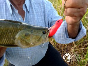 HOPLIAS LURES TESTEO MODELO KILLER Y MINI KILLER3