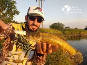 HOPLIAS LURES TESTEO MODELO KILLER Y MINI KILLER7